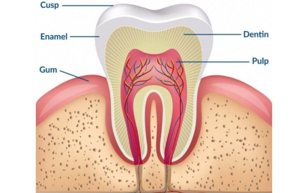 Teeth Whitening Science